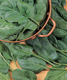 Spinach, Baby's Leaf Hybrid, , large